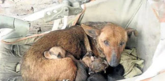 Perrita mantuvo vivo a un bebé abandonado