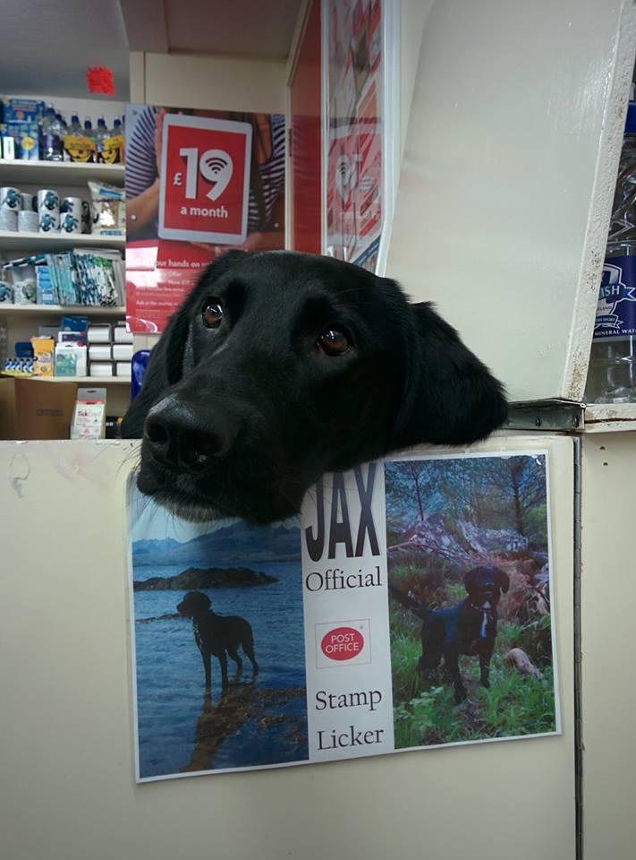 Perro atiende oficina de correos