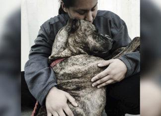 Perro devuelto 11 veces al refugio