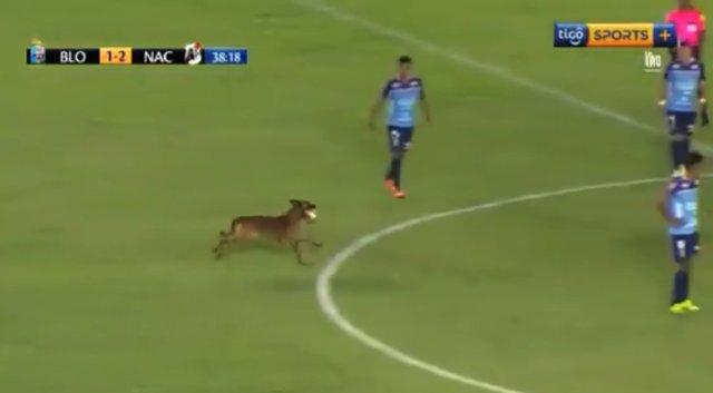 Perro en el partido