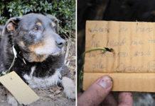 Perro héroe busca al vecino para ayudar a su amiga
