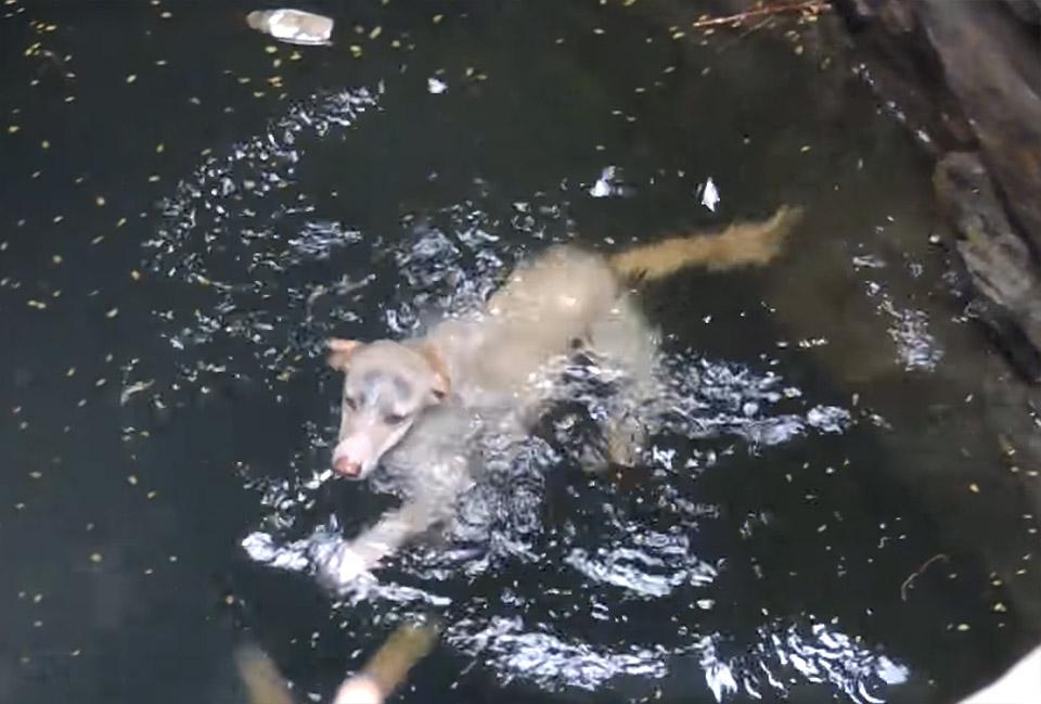 Perro se está ahogando