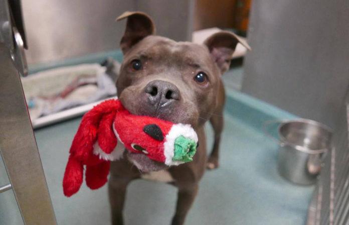 Perro sostiene su juguete mientras está programado para morir
