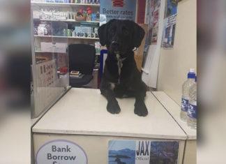 Perro trabaja en la oficina de correos en Escocia