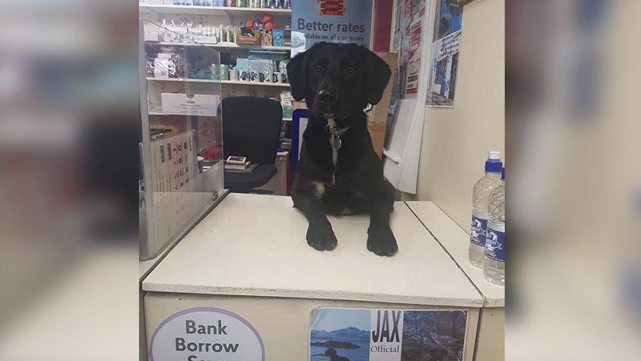 Este perro que trabaja en una oficina de correos en for Que tiene una oficina