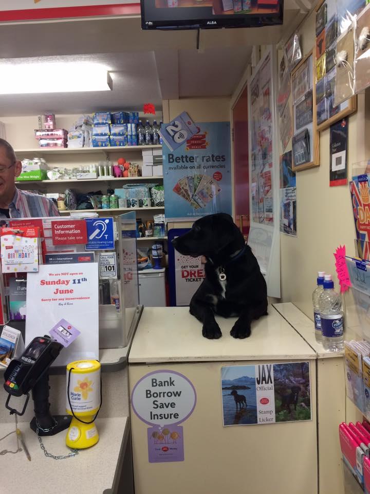 Perro trabaja en la oficina de correos