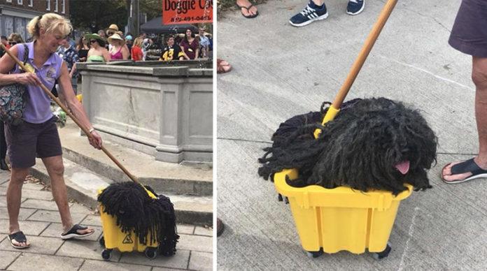 Perro trapeador se roba el espectaculo en desfile de Halloween