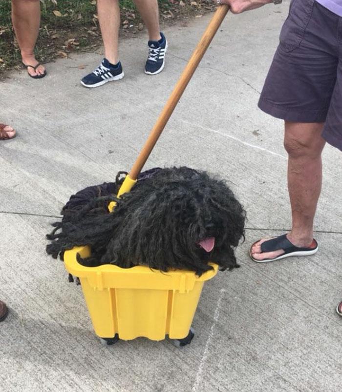 Perro trapeador