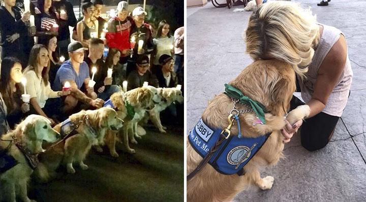 Perros de terapia ayudan a personas por masacre en Las Vegas
