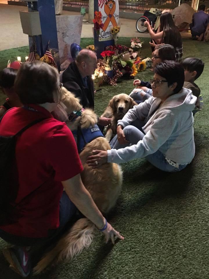 Perros de terapia ayudando personas