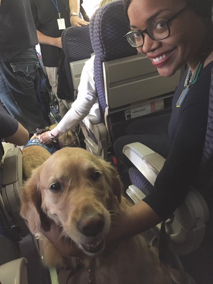 Perros de terapia en el vuelo