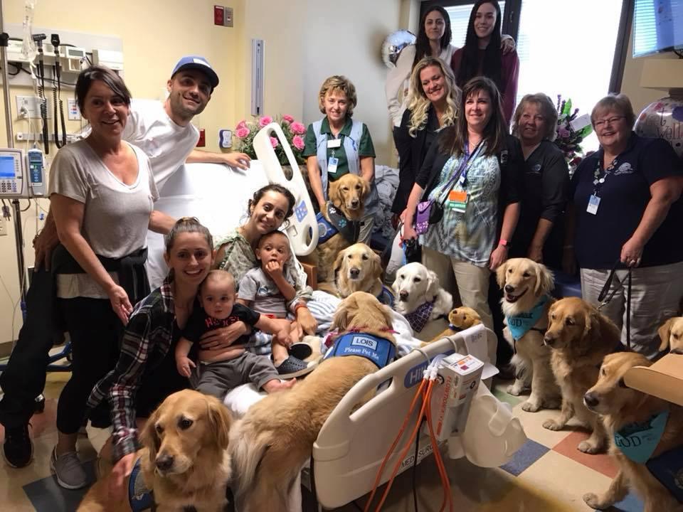 Perros en el hospital