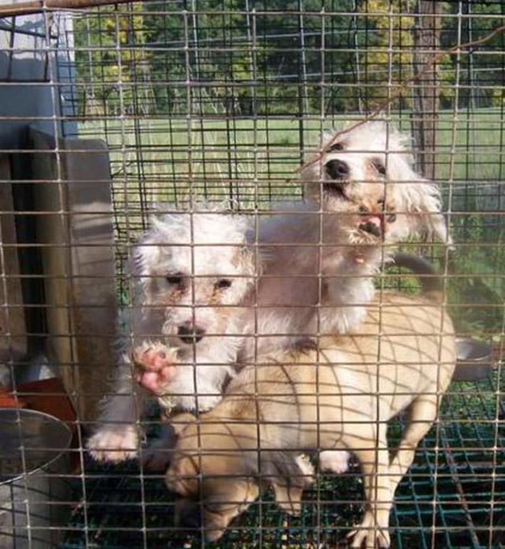 Perros en fábrica de cachorros