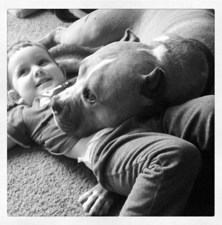 Pitbull y su niño