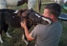 Poni rescatado abraza al hombre que lo salvó