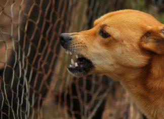 Rabia en perros o hidrofobia canina