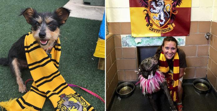 Refugio clasifica perros en casas de Hogwarts para que sean adoptados