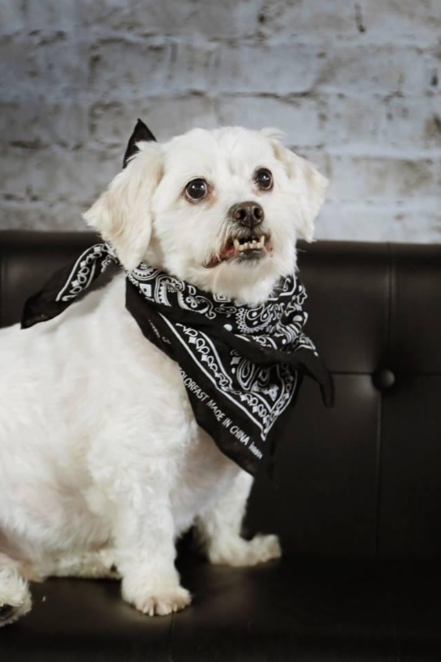 Riley perro adoptado
