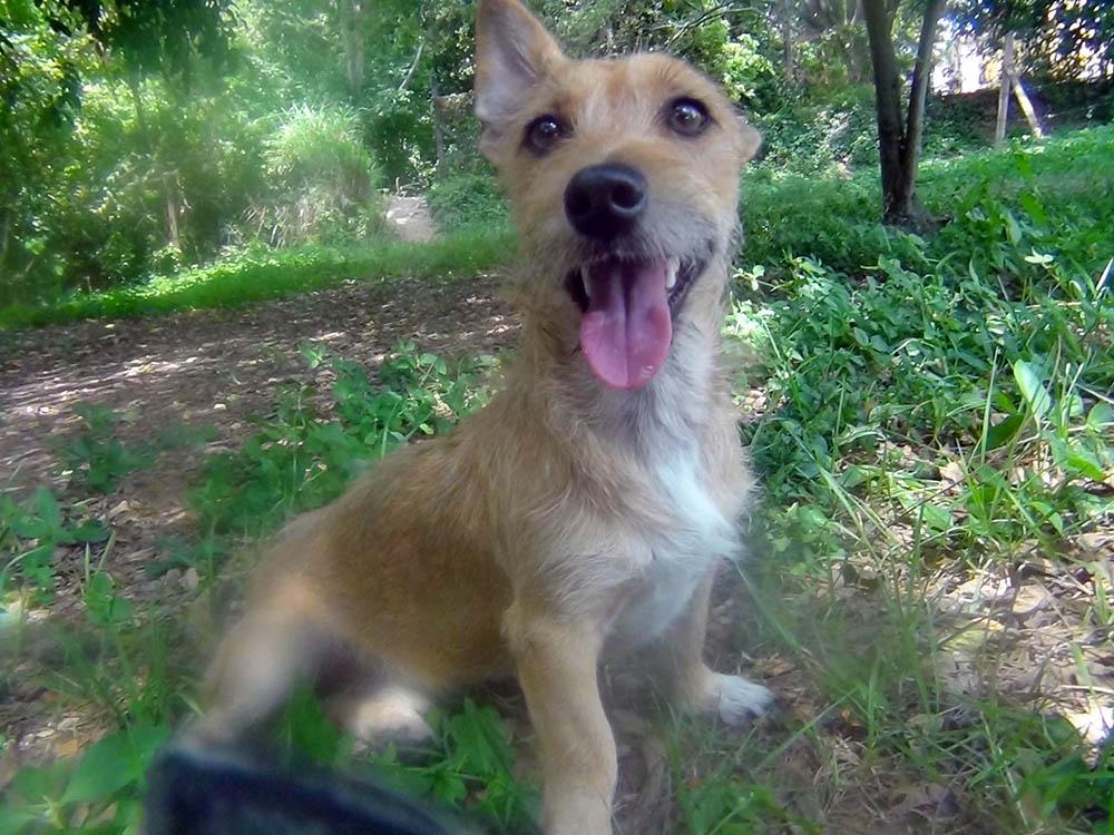 Romeo feliz