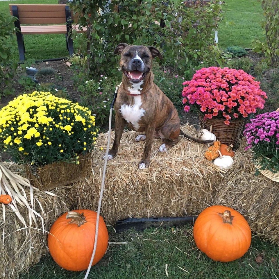 Sheana en Halloween