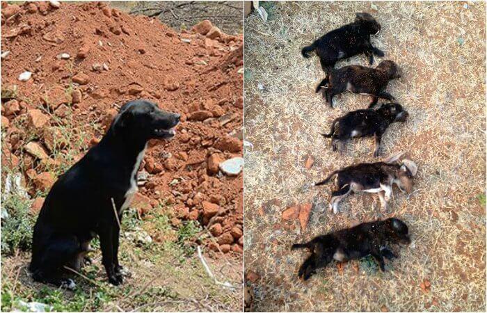 Ammu y sus cachorros muertos