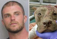 Arrestan sospechoso de la muerte del pitbull que fue encontrado torturado dentro de una maleta