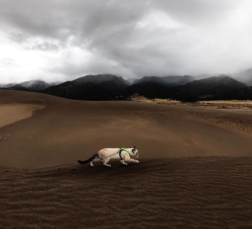 Baloo en el desierto