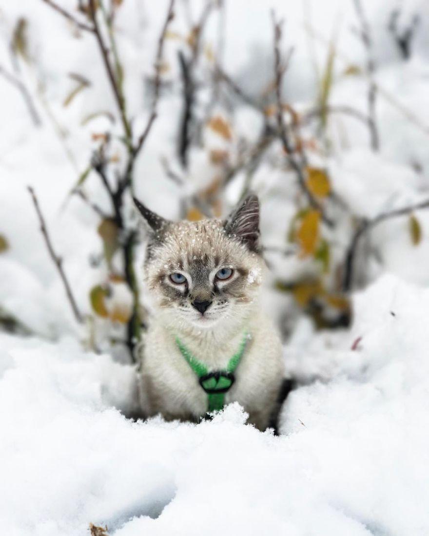 Baloo en la nieve