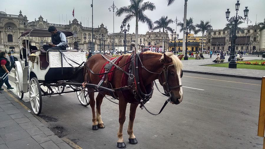 Barcelona prohíbe carruajes de caballos