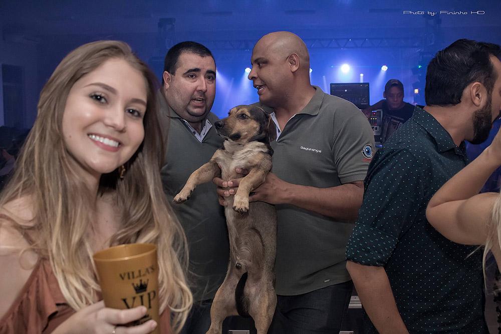Dingo atrapado