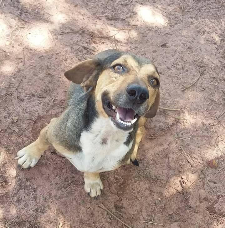 Dingo feliz