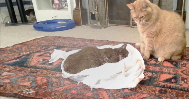 El mejor amigo de este gato murió de cáncer