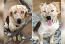 Estas fotos del antes y después de un perro adoptado sera lo mas hermoso que veras hoy
