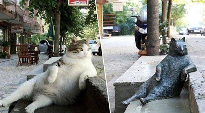 Gato Tombili Estambul