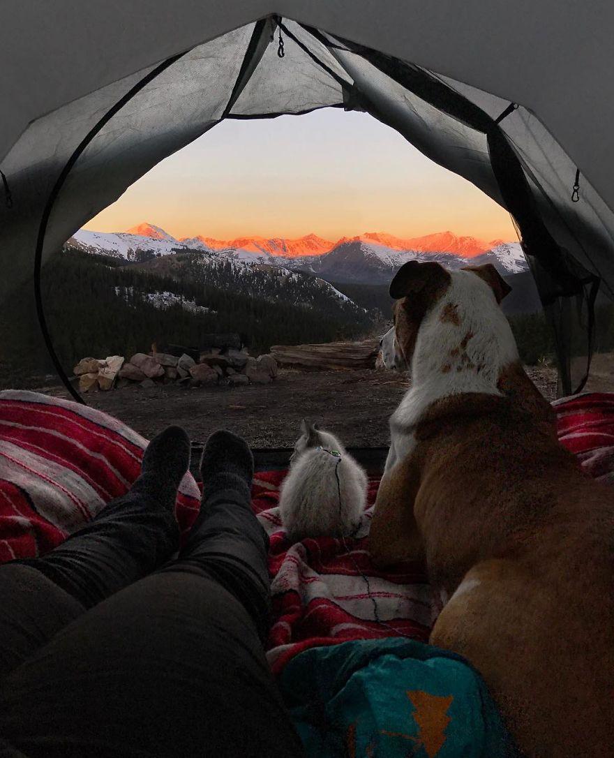 Henry y Baloo acampando