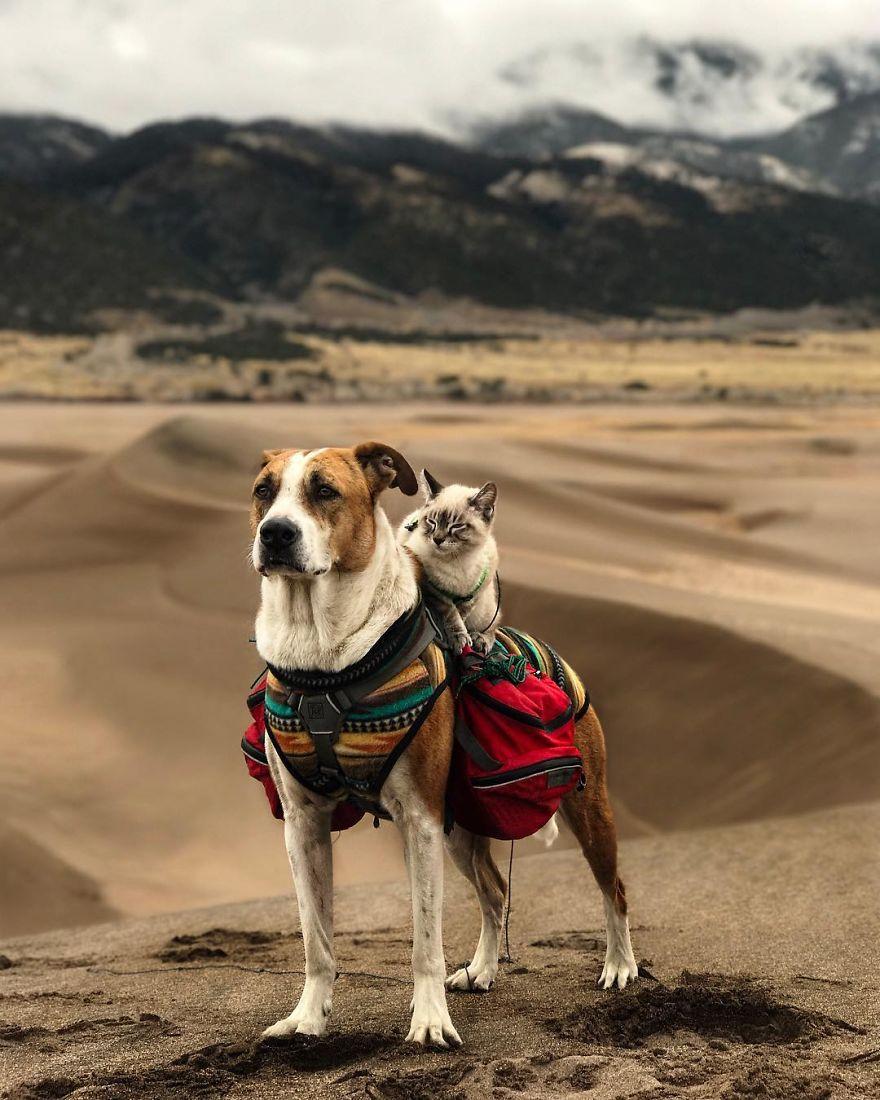 Henry y Baloo en el desierto
