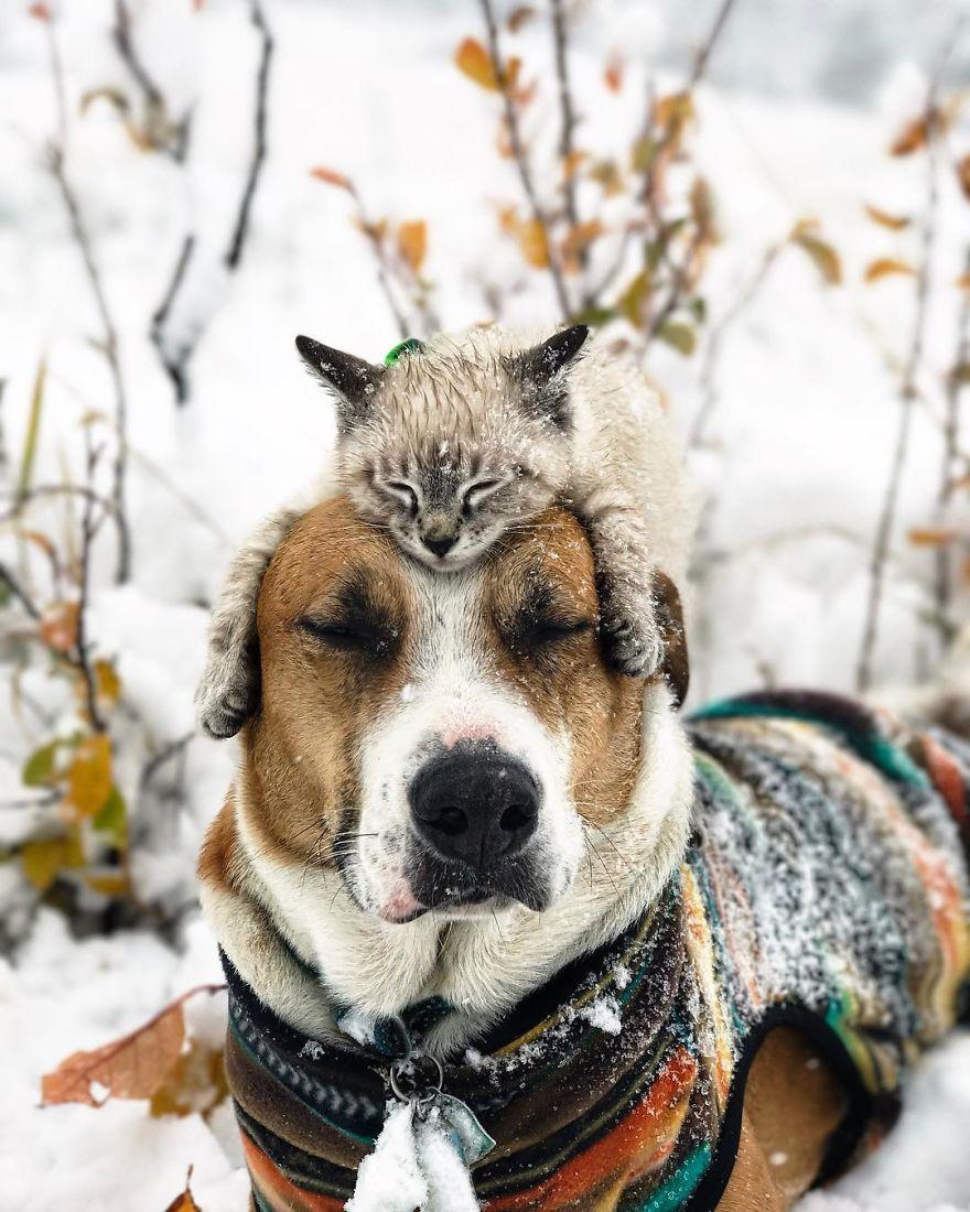 Henry y Baloo en la nieve