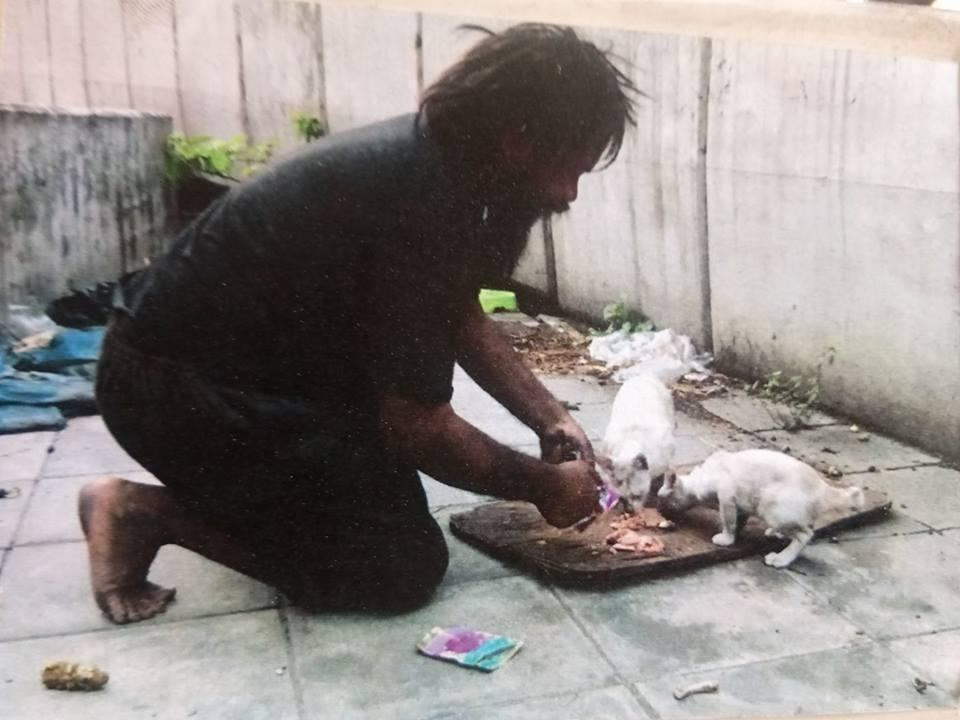 Loong alimenta gatos