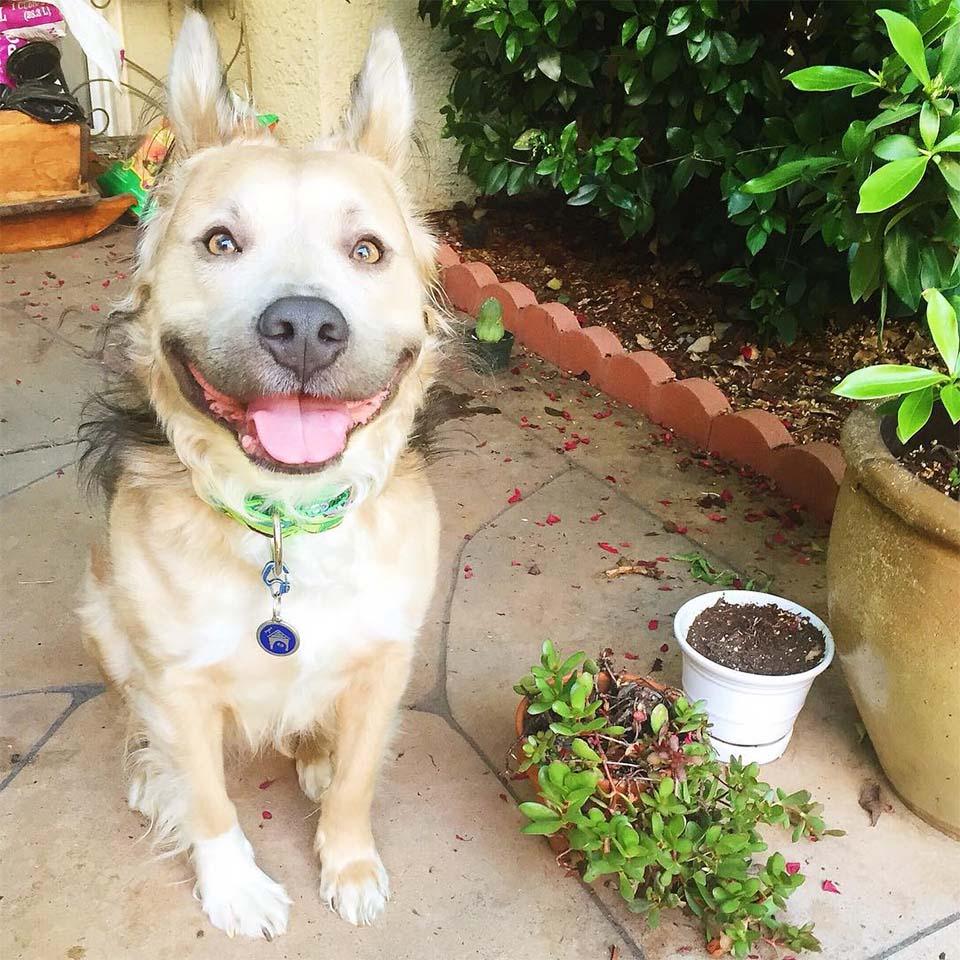 Milo sonríe