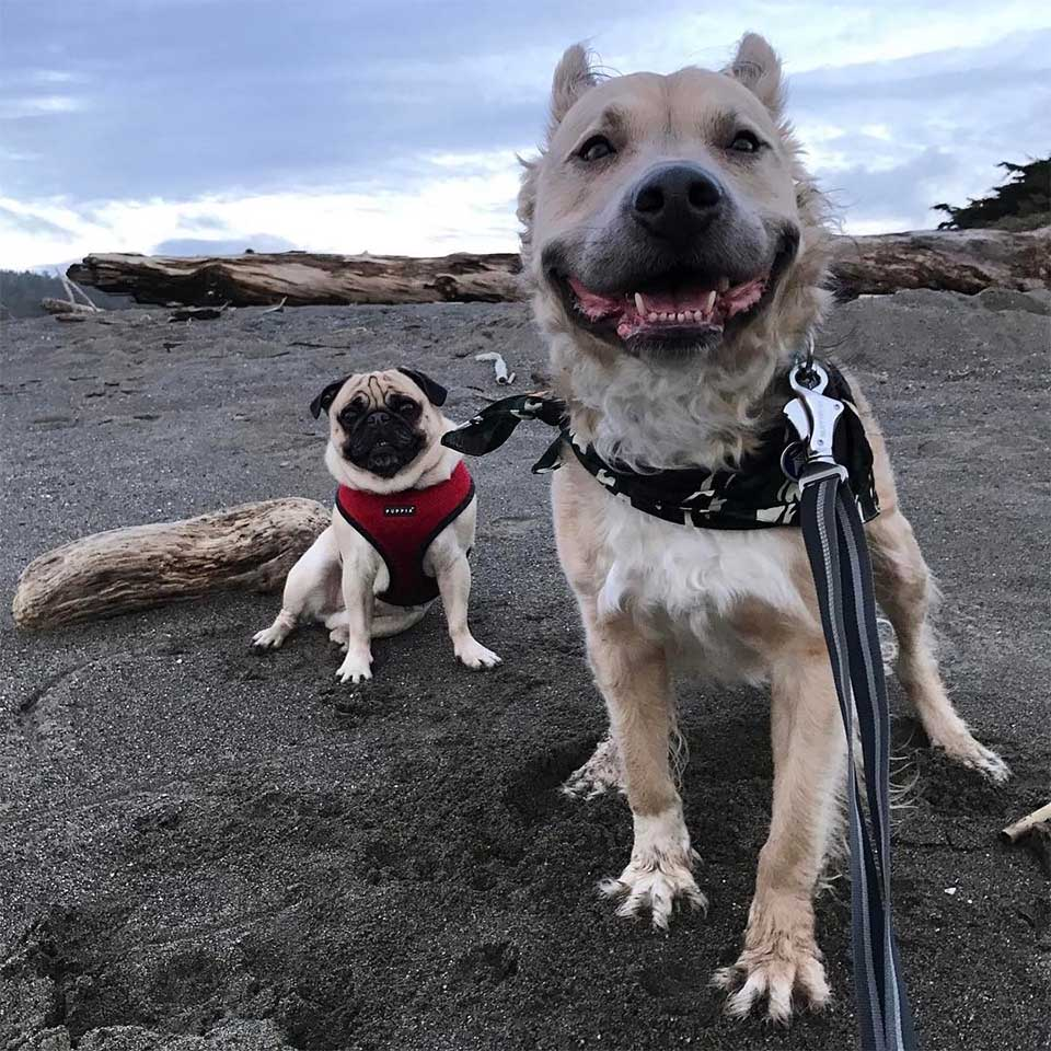 Milo y un amigo