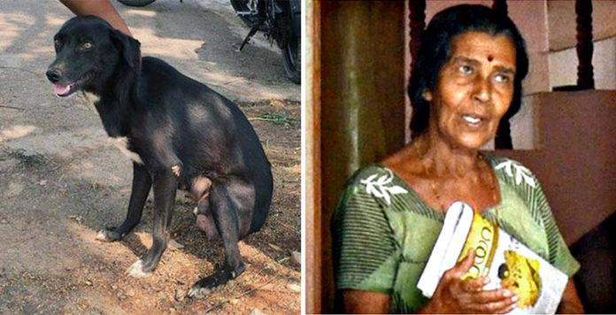 Mujer India asesina 8 cachorros delante de su madre