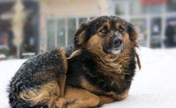 Nueva ley prohíbe dejar perro en el frío