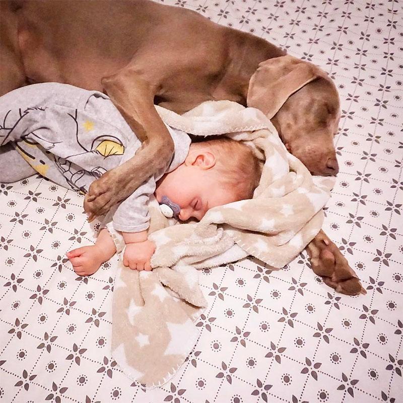 Perro ama bebé