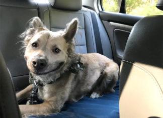 Perro con enorme sonrisa