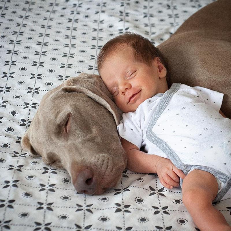 Perro esperaba paciente el nacimiento del bebé
