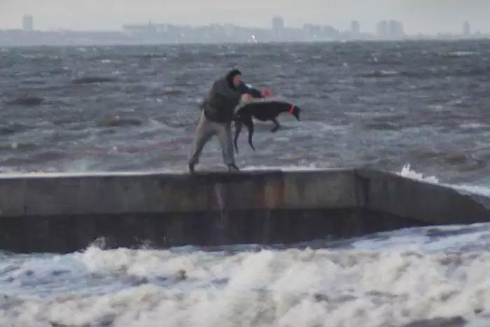 Perro fue arrojado al mar
