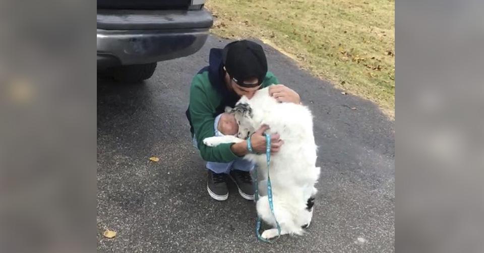 Perro lastimado no deja de abrazar a su nuevo papá