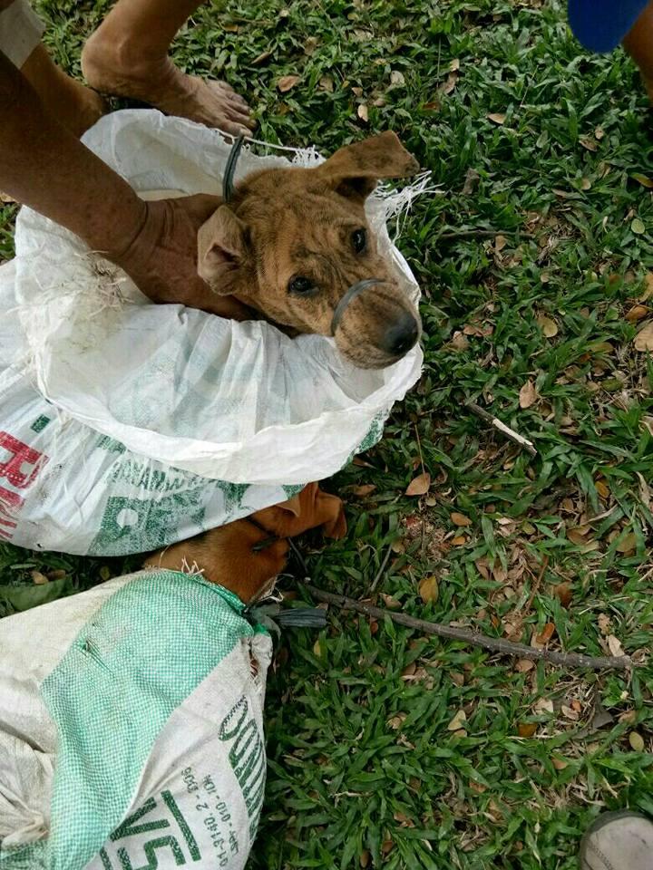 Perro llevado en bolsa