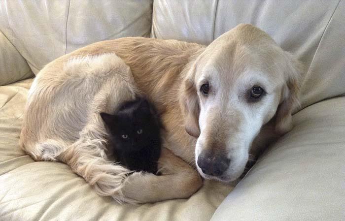 Perro perdió a su amigo felino con cáncer pero ahora es feliz de nuevo