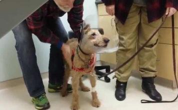 Perro recibe cirugía para recuperar la vista